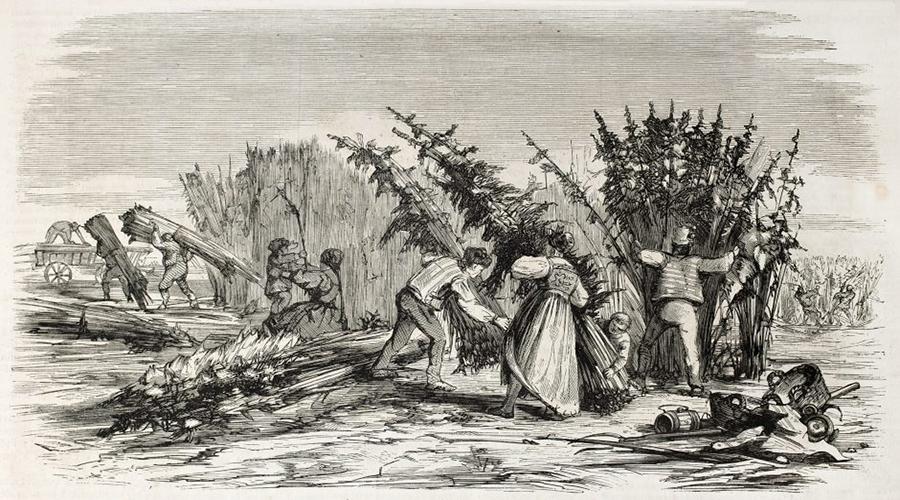 Cosecha de cáñamo en el siglo XV