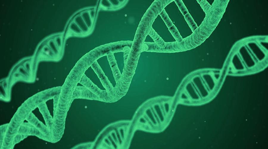 Decifrando el genoma del cannabis