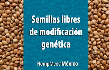 Semillas de Cáñamo sin modificacion genética