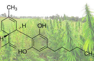El cannabidiol del cáñamo no es diferente al de la marihuana